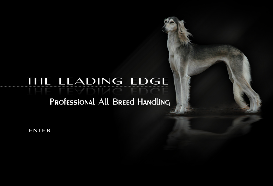 The Leading Edge - Professional All Breed Handling